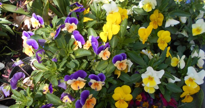 Lillabo Frühling